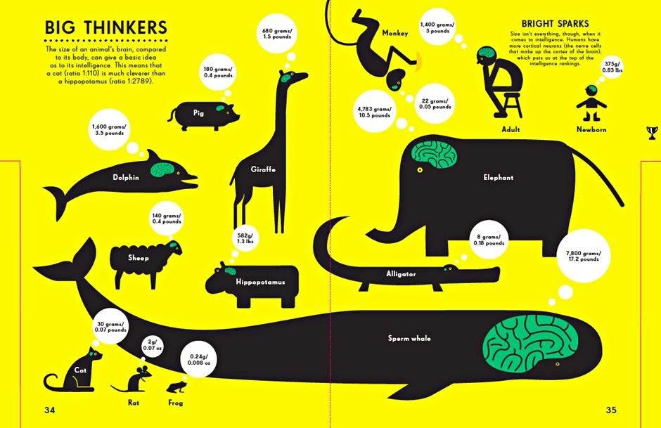 creative infographics